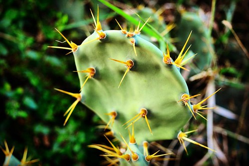 Sometime even thorns are beautiful.