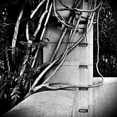 Embrace (Dom Guillochon) Tags: plants building nature vines branches embrace alcazargarden