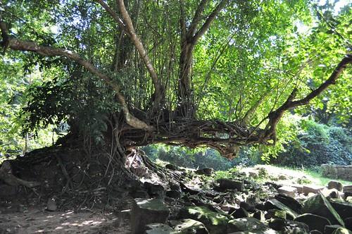 angkor - cambodge 2014 63