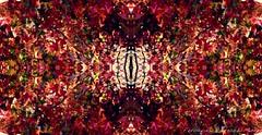 (ojoadicto) Tags: naturaleza abstract nature autum foliage otoo abstracto digitalmanipulation artisticphotography