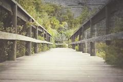 Boardwalk (Schwaco) Tags: wood trees green path walk board grunge sydney australia hike boardwalk railing bushes