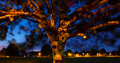 """The Orange Tree"" (-Mark Bean-) Tags: wood light orange color colour tree wool nature colors field forest painting lite countryside wooden saturated oak focus long exposure branch colours nocturnal natural bokeh branches yarn saturation common foilage multicolor bombed hertfordshire redbourn multicolour 2016 noctography"