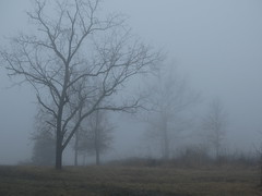 Fog, mist and trees on a winter morning. (Gerald Barnett) Tags: trees usa mist tree art nature misty fog mystery landscape outdoors grey countryside illinois quiet close availablelight foggy tranquility atmosphere naturallight calm silence serenity soul mysterious mystical serene inspirational sublime contemplative tranquil mystic hushed artphoto morningfog subdued serenitynow artpic treesinfog naturalcolor subduedlight foggylandscape treesinmist mistylandscape foggyscene landscapeinmist fabulousfog landscapewithsoul landscapeinfog landscapewithfog foggyscenery