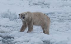 P1110761 (TallGrass-IA) Tags: snow nature norway lumix panasonic svalbard arctic micro g6 43 linblad 1235 expeditions mirrorless