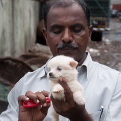 Original pic here : http://ift.tt/29czaD2 (topcao) Tags: instagram  india journey  i was mumbai streets when crossed this guy combing little dog travel traveling igindia vacation visiting instatravel instago instagood trip holiday photooftheday fun travelling tourism tourist instapassport instatraveling mytravelgram travelgram travelingram igtravel delhi rajasthan love pet happy summer