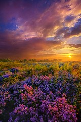 Life Is Measured In Moments (Phil~Koch) Tags: life camera morning travel blue light sunset summer portrait sky sun art love nature colors beautiful field lines weather yellow vertical wisconsin clouds rural sunrise canon season landscape outdoors photography hope dawn living office twilight heaven mood ray peace purple natural earth unity horizon fineart country joy arts scenic meadow inspired dramatic beam journey environment serene inspirational popular emotions hdr lilacs horizons trending