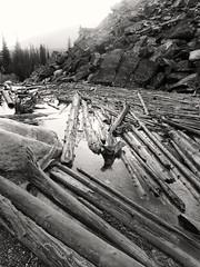 Logs (the underlord) Tags: lake canada rain logs alberta raining banffnationalpark lakemoraine