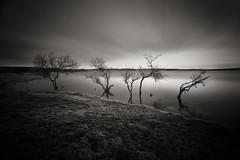 On the Edge (richieJ1) Tags: cornwall lake reservoir collyford trees water vignette mono longexposure nikon black white