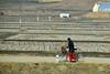 North Korean Countryside (Gedsman) Tags: korea north northkorea train countryside asia peninsula history communism communist juche kim