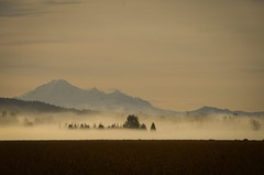 Mount Baker as viewed from Maple Ridge BC (Ian Threlkeld) Tags: mountains fog volcano landscapes spring nikon scenery baker britishcolumbia foggy explore pacificnorthwest fields farms westcoast mapleridge mountbaker mtbaker nikonphotos foggymorning bcoutdoors pittmeadows beautifulbc beautifulbritishcolumbia blueberryfields nikonphotography ridgemeadows nikonphoto hellobc explorebc d7000 mynikonlife