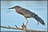 Time to unwind! (WanaM3) Tags: heron nature birds nikon texas wildlife ngc bayou npc pasadena canoeing paddling greenie greenheron clearlakecity d7100 avianexcellence horsepenbayou wanam3 nikond7100