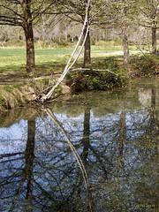 Fuentes del Marqus (Caravaca, Murcia) (gloriasoria) Tags: trees nature water reflections pond murcia caravaca fuentesdelmarques