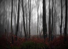 MENACE (kenny barker) Tags: blur dark scotland woods explore edit kennybarker