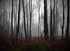 MENACE (kenny barker) Tags: blur dark scotland woods explore edit kennybarker