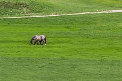 Al pascolo (mimmotamburro) Tags: horse verde canon wildlife natura cavalli animali 600d