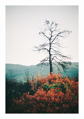 017_10 (jimbonzo079) Tags: world new light summer color colour tree green slr art film 35mm out lens landscape greek fire 50mm europe mood fuji outdoor earth country hellas scan greece burn 200 gr 135 f18 scape fd c200 fujicolor 2015 oropos attiki       analoq
