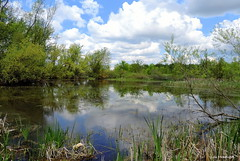Flamborough Pond (Lois McNaught) Tags: ontario canada reflection nature water clouds spring pond hamilton scene serene tranquil flamborough