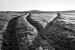 Bright (gregoryphoto150) Tags: uk blackandwhite monochrome field rural sunrise landscape dawn blackwhite frost bright farm tracks dramatic gloucestershire crops