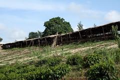 Uphill (My photos live here) Tags: africa canon eos tea fort farm plantation portal uganda 1000d