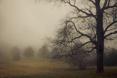 Goblin tree (SolsticeSol) Tags: fog eerie spooky