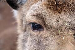 IMG_8211 (u.wittwer) Tags: park zoo schweiz switzerland tiere suisse tierpark heimat arth naturpark goldau widi
