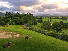 Tweed Valley sunset (NettyA) Tags: sunset art clouds rural countryside artgallery au australia nsw newsouthwales tweed 2016 murwillumbah rockanimals appleiphone6 tweedregionalgallery southmurwillumbah margaretolleyartgallery margaretolleygallery