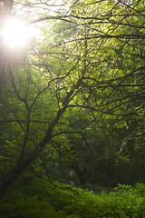 Ray of Hope (cjb_photography) Tags: park trees sun sunlight toronto nature leaves hope ray highpark path branches bushes pathway torontolife torontophoto torontoclicks
