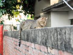 P4085738 (daisuke1230) Tags: cat olympus neko em  m43