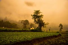 Misty Morning (habeebrahmanphotography) Tags: morning cloud sunlight india mist nature misty landscape photography landscapes natural cloudy farm kerala munnar idukki