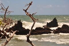 como um sonho... (Ruby Ferreira ) Tags: waves dof branches atlanticocean oceanoatlntico joopessoapb praiaocenica northeastbrazilian