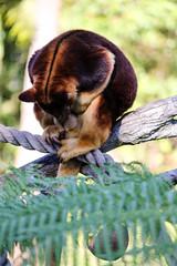 (Johanna Shaw) Tags: tarongazoo sydney taronga animals canon1100d 55250mm