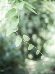 PhoTones Works #8038 (TAKUMA KIMURA) Tags: photones olympus penf takuma kimura      landscape scenery nature leaf plant