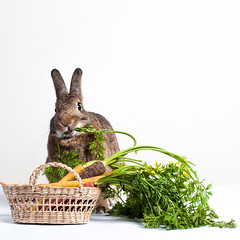 Salad Eating Contest (Jeric Santiago) Tags: pet rabbit bunny animal basket eating conejo carrot lapin hase kaninchen   winterrabbit