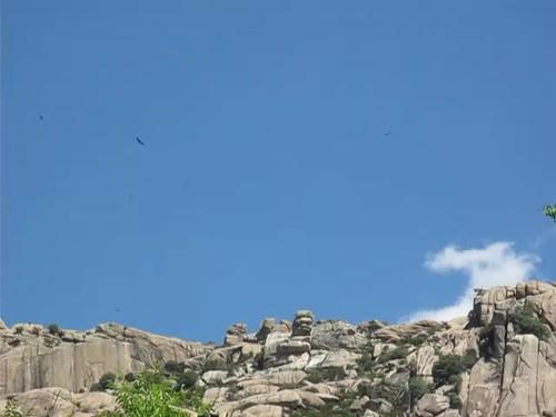 Vale gieren cirkelen boven de camping (2)