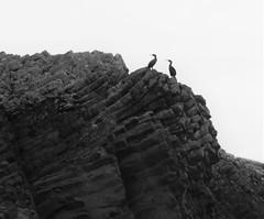 Cormorants, Isle of Staffa (lesleyw8) Tags: scotland cormorants basalt columns staffa sea