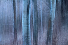 Dusk (ebergcanada) Tags: abstract blur tree nature forest evening spring icm millcreek intentionalcameramovement