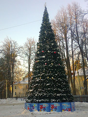 NewYearTree2 (Tiny Gremlin) Tags: newyeartree   06012015
