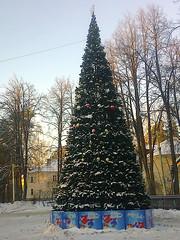 NewYearTree2 (Tiny Gremlin) Tags: newyeartree новогодняяёлка морозисолнце 06012015 самыйхолодныйденьзимы