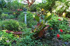 Key West (Florida) Trip, November 2014 3185Ri 4x6 (edgarandron - Busy!) Tags: keys florida keywest floridakeys higgsbeach westmartellotower keywestgardenclub