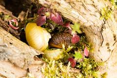 Macro of a snail.jpg (inekehuizing) Tags: nature landscape spring natuur lelystad landschap voorjaar oostvaarderplassen inekehuizingfotografie