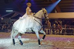 Salon du cheval de Hannut 2015 (NosChevaux.com) Tags: horses horse cheval pre chevaux paard paarden spectacle poney dressage frison équitation salonducheval hannut spectacleéquestre