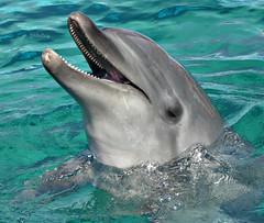 *Nova/No.4(/4)-HSP (EmilyOrca) Tags: portrait aquarium dolphin cetacean