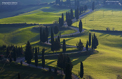 Val d'Orcia the winding road (Agrippino Salerno) Tags: road morning trees light shadow italy canon hills tuscany cypress winding pienza valdorcia montichiello agrippinosalerno