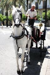 Coche de caballos (Josemari Gago) Tags: camera leica horse 35mm caballo carriage m summicron f2 andalusia asph jerez tipycal typ240
