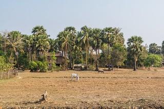 angkor - cambodge 2016 74