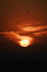 Relax (Julian725) Tags: sunset sky sun silhouette fire losangeles nikon horizon 28mm