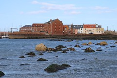 2016 - 3.5.16 North Berwick (71) (marie137) Tags: trees sea sky people sun fish beach dogs water weather architecture landscape movement sand collie rocks labrador play ben chips splash berwick murphy marie137