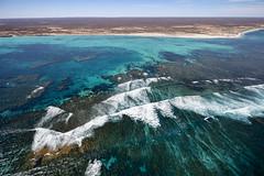 WA Coral Bay - 4707