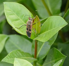 Bug (chdphd) Tags: khajuraho