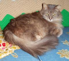 Oskar the Cat.. April 2016 (straubted) Tags: chat gato felines katze gatto catphotos felinephotos oskarthecat